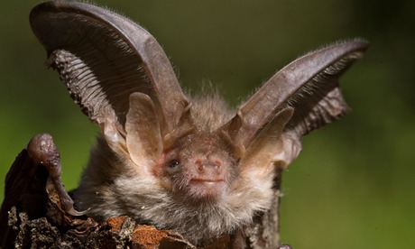 European bat population rises after years of decline, study finds