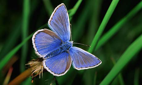 British farmland butterflies bounce back after 2013 summer