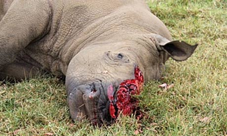 Seven rhinos killed by poachers in Kenya's bloodiest week