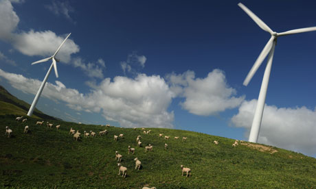 Sheep graze under wind turbines