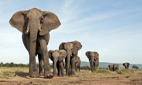 Ivory stockpile to be publicly destroyed as Obama seeks to end illegal trade