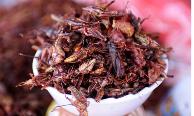 Should we learn to love eating insects? | Life and style ...