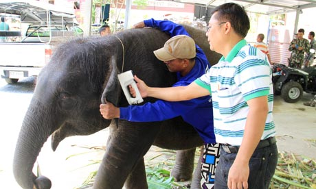 Thailand cracks down on illegal elephant ring