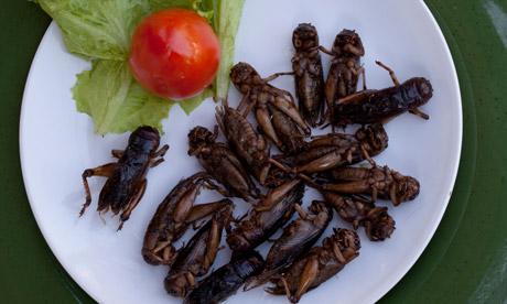 Edible fried insects
