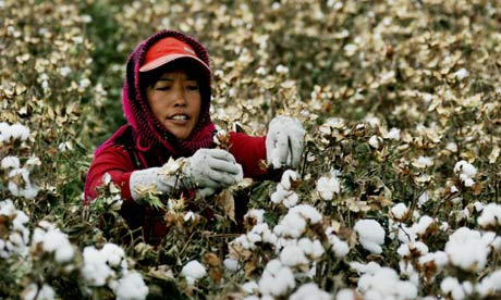 Cotton picker Xinjiang, a cotton picker in China