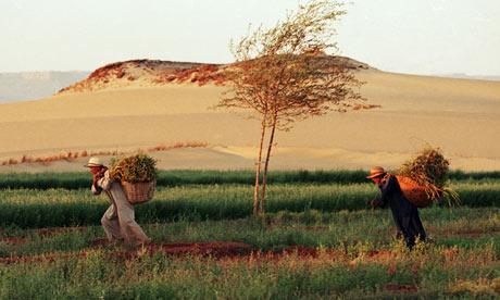 Farmers work in thhe Sahara desert