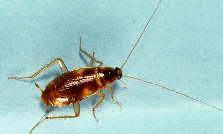 I Think I Just Saw A Roach In My Bathroom Social
