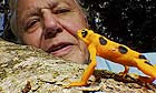 David Attenborough in a still from his forthcoming television series 'Life In Cold Blood'