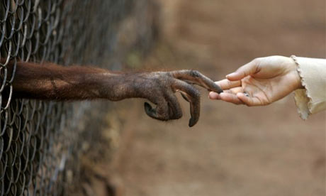 An orangutan touches the hand of a journalist in a wildlife protection center in Thailand