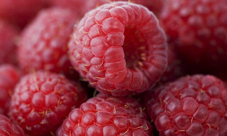 http://static.guim.co.uk/sys-images/Guardian/Pix/pictures/2008/09/28/raspberries460x276.jpg