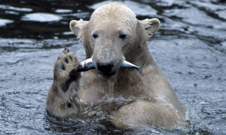 bear and fish relationship