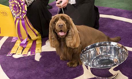 stump, Westminster Kennel Club dog show