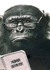 Ask Carole: Chimpanzee wearing spectacles