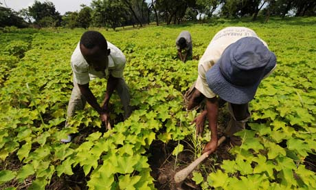 biofuel africa biocarburanti italia africa