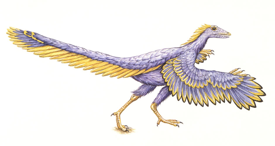 Archaeopteryx + Link Between Dinosaurs and Birds