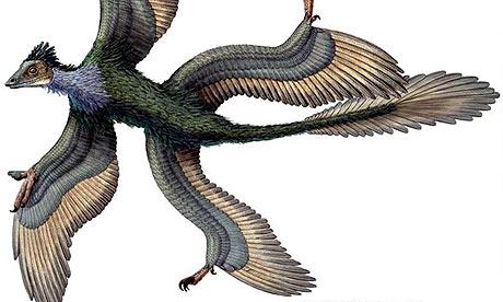 Four-winged-dinosaur-Micr-001.jpg