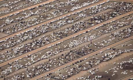 ONU recomenda dieta vegana para combater mudança climática