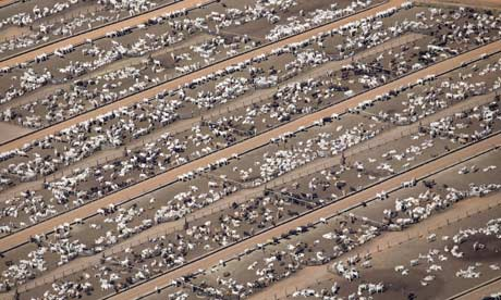 a cattle farm at Estancia 002