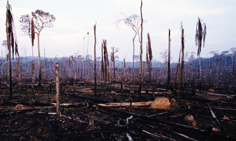 Slash and burn deforestation