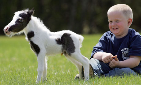 The smallest horse in the world ever - photo#49
