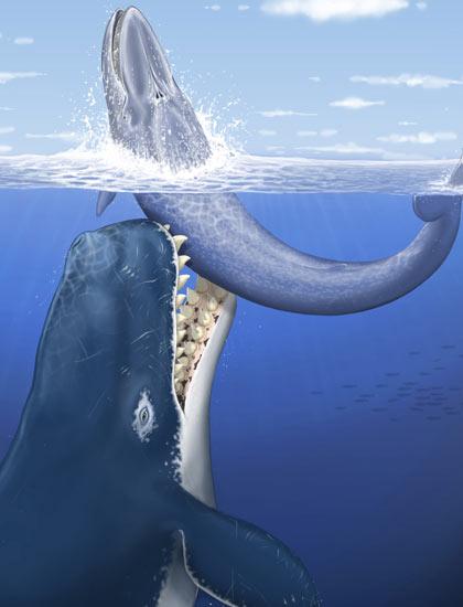 Kraken and Leviathan - TV Tropes