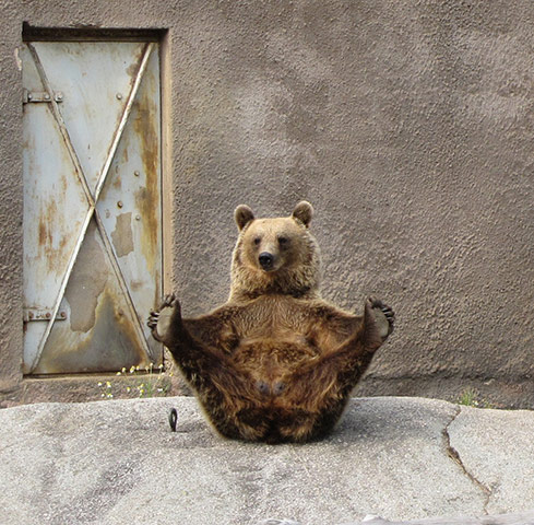 http://static.guim.co.uk/sys-images/Guardian/Pix/pictures/2010/9/15/1284553899086/1-Female-Brown-bear-doing-001.jpg