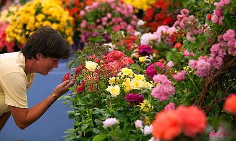 A spectator looks at flowers at the Hampton Court Flower Show