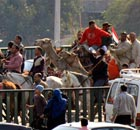 Supporters of President Hosni Mubarak ride camels in Cairo, Egypt