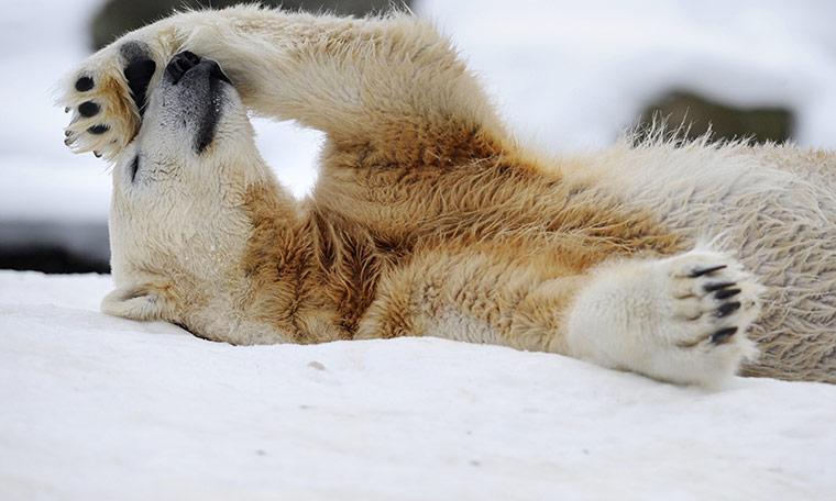 Polar-bear-Knut-died-013.jpg