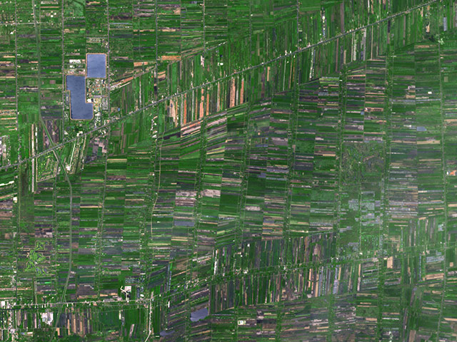 Agricultural Pattern: Outside of Bangkok, Thailand, rice paddies