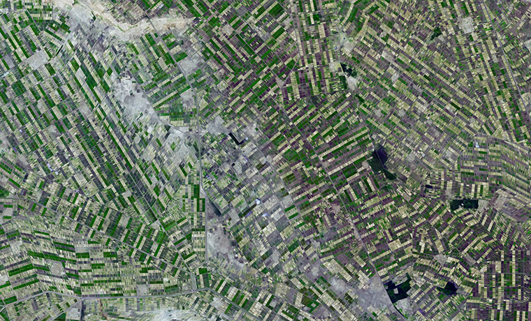 Agricultural Pattern: irrigated fields stretches out across the state of El Gezira
