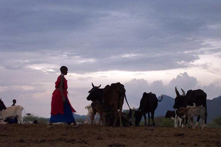 Pastoral communities in india