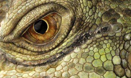 A-close-up-view-of-an-eye-008.jpg