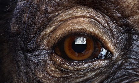Eye spy: can you identify an animal by its eye - quiz ...Close Up Of An Animal Eye