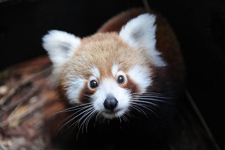 Taronga-Zoo-Welcomes-Baby-004.jpg