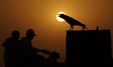 A crow sits during a heat wave in Lahore