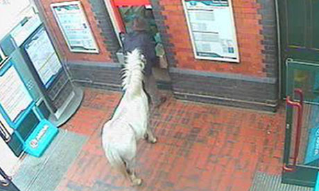 Pony at Wrexham station