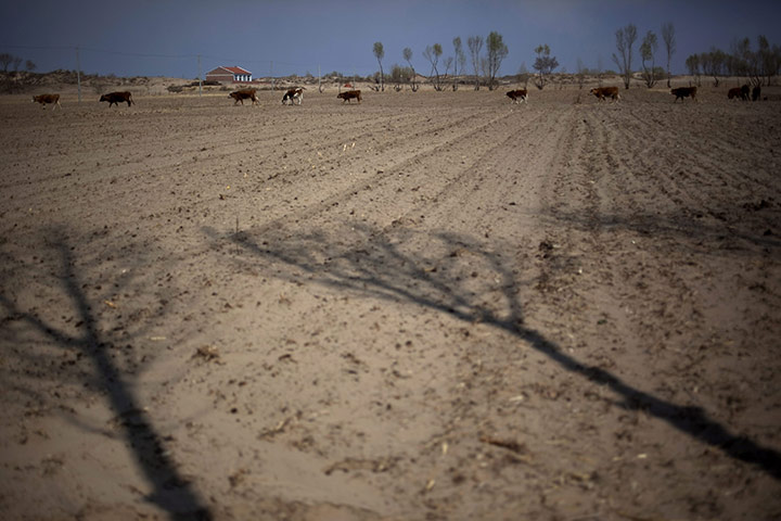 Desertification in Inner Mongolia, China - in pictures ...