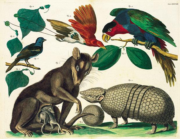 ... Albertus Seba: Cabinet Of Natural Curiosities