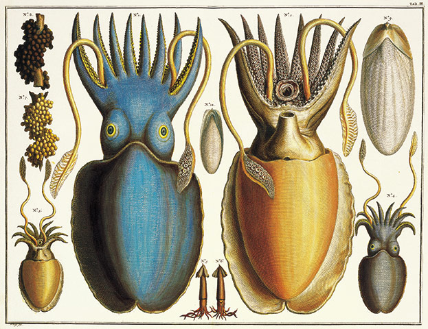 Delicieux ... Albertus Seba: Cabinet Of Natural Curiosities