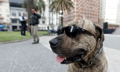A dog wearing sunglasses sits at Plaza Independencia Square in Montevideo, Uruguay.