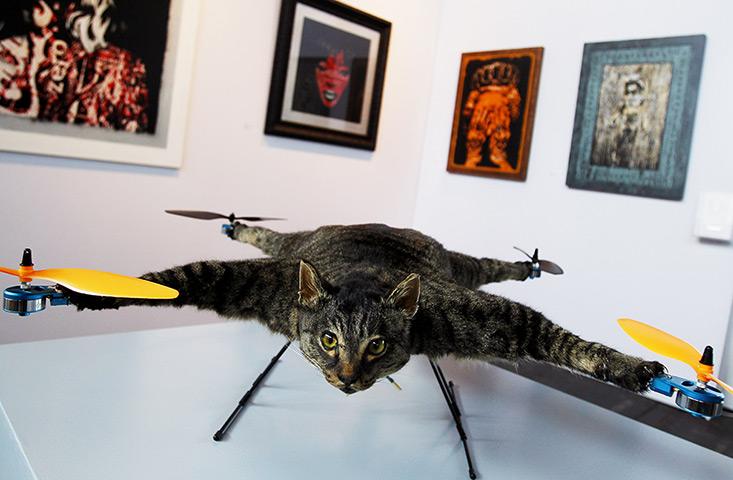 Chopper cat?  Or flying zombie?