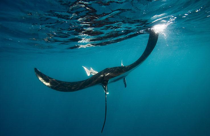 Кто морской, понятно, но кто же дьявол?