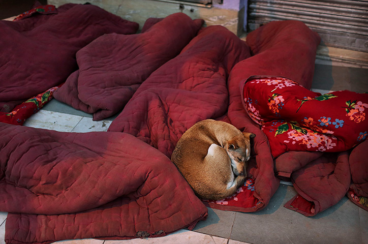 Cold weather in India: A stray dog sleeps with labourers on a pavement in New Delhi