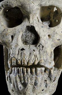Cranio di Homo erectus trovato in Georgia