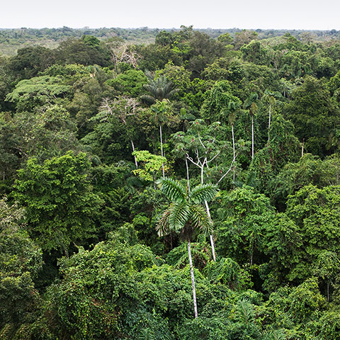 Trees Of The Amazon Rainforest In Pictures Environment