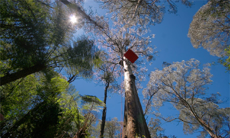Little Red Toolangi Treehouse - long view base with blue sky