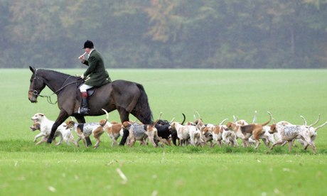 POLL: Should the fox-hunting laws in the UK be relaxed?