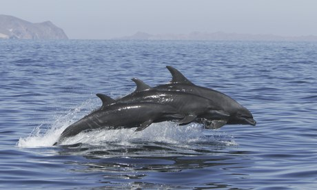 Bottlenose dolphins off US coast hit by measles-like virus