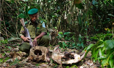 Gold and poaching bring murder and misery to Congolese wildlife reserve